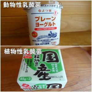 動物性乳酸菌(ヨーグルト)&植物性乳酸菌(納豆)