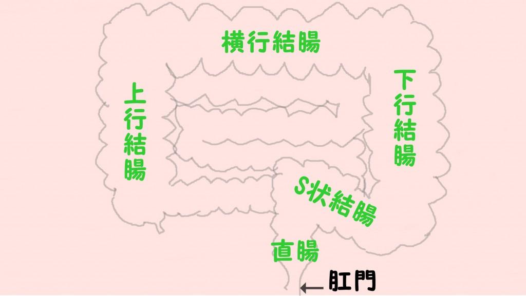 大腸の各部位の名前