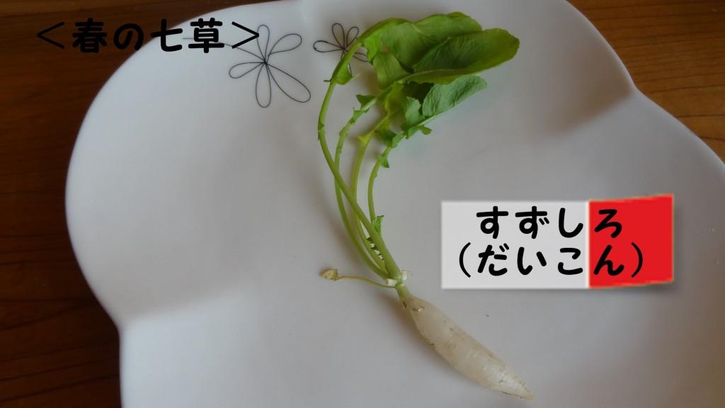 <春の七草>すずしろ(だいこん)