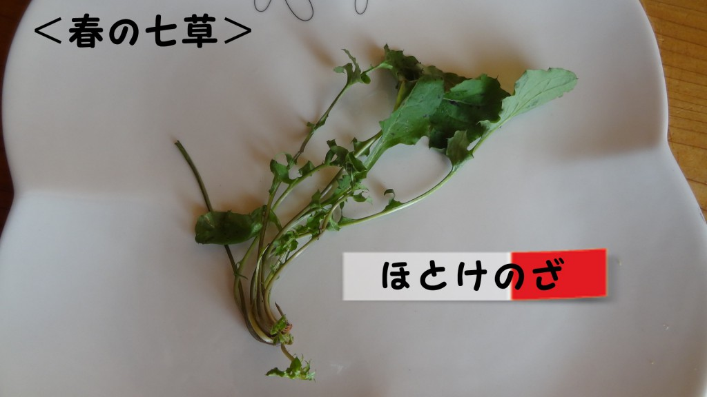 <春の七草>ほとけのざ