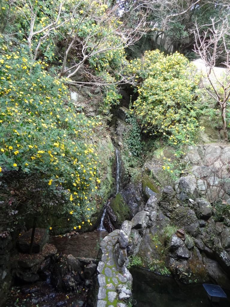 和田乃屋さんのお庭