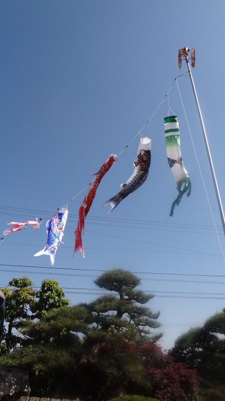 我が家の鯉のぼり(1)