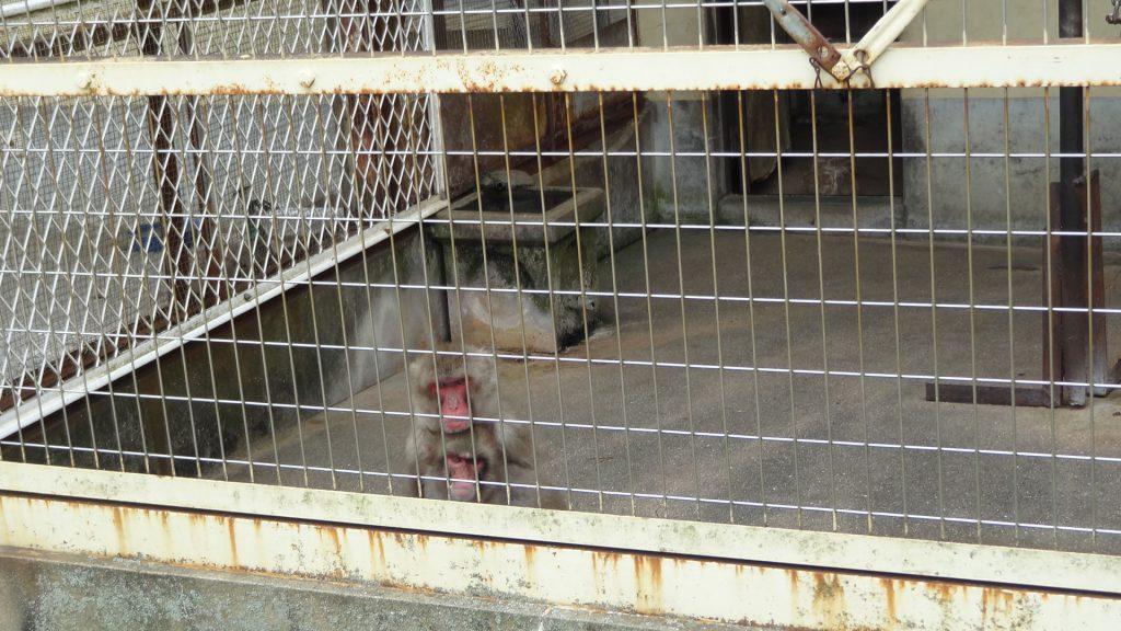 小豆島銚子渓 自然動物園 お猿の国(2)